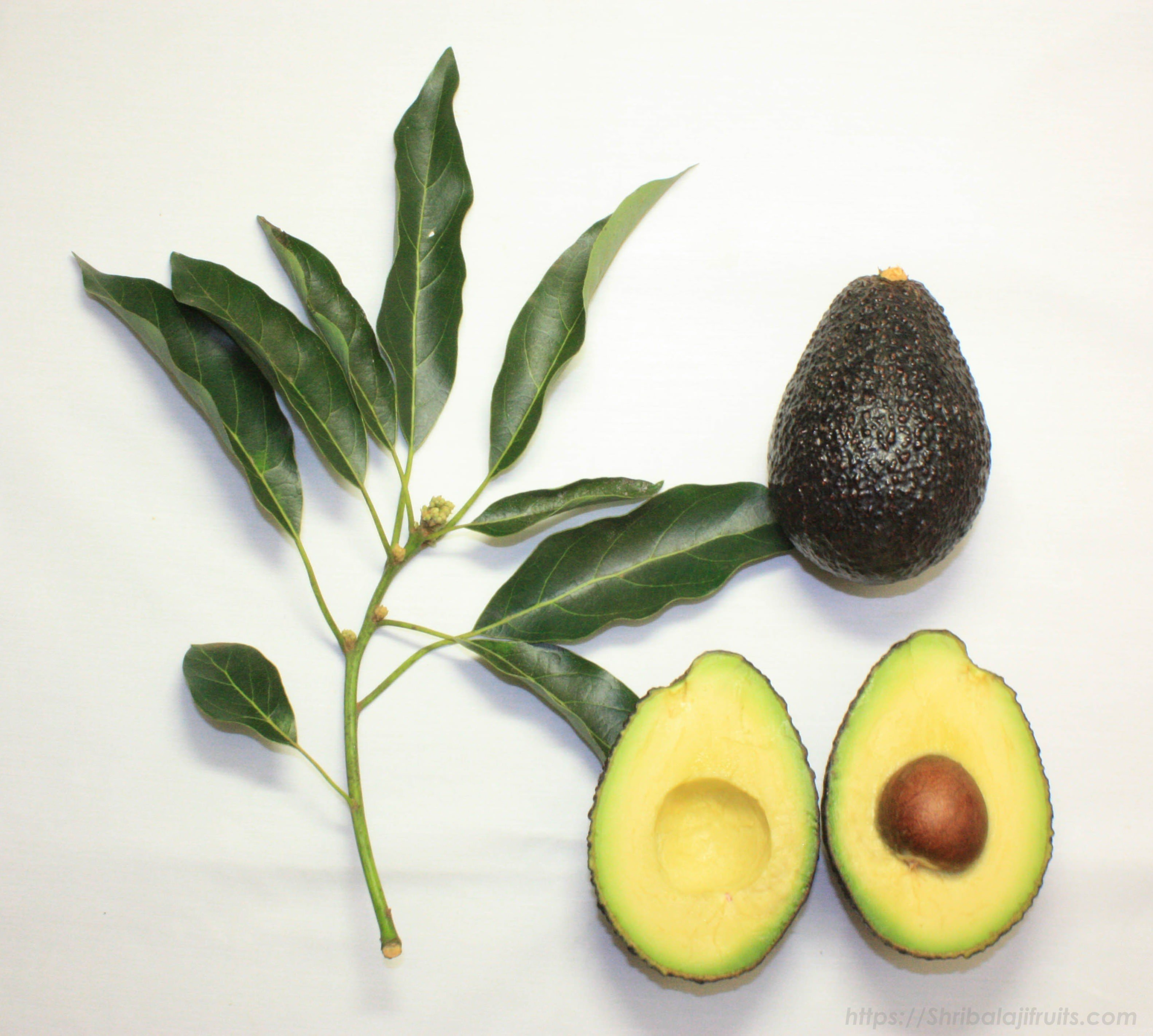 avocado fruit or vegetable
